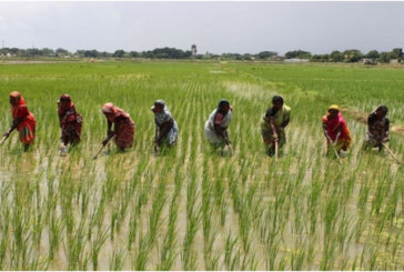 1600 farmers register for Anchor Borrowers' Scheme in Daura